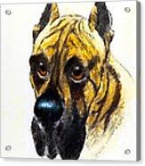 Boarhound Portrait Acrylic Print