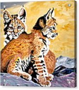 Bob Kittens Acrylic Print by Phyllis Kaltenbach