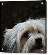 Bob The Dog Acrylic Print