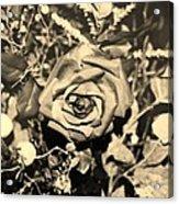 Boca Rose Acrylic Print