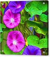 Bohemian Garden Morning Glory Acrylic Print