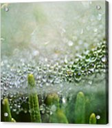 Bokeh And Bubbles Acrylic Print