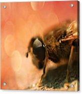Bokeh Bee Acrylic Print