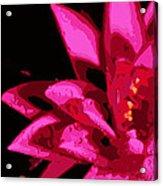Bold Lily Acrylic Print