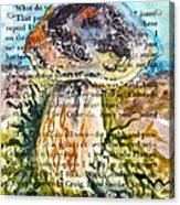 Boletus Edulis Close Up Acrylic Print
