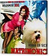 Bolognese Dog Art - Matrimonio All Italiana Movie Poster Acrylic Print