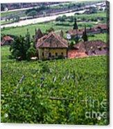 Bolzano Vineyard  Acrylic Print