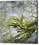 Bombou Comme Une Carte Postale Acrylic Print