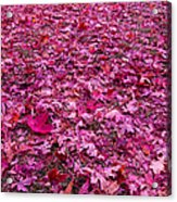 Pink Leaves Acrylic Print