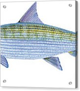 Bonefish Acrylic Print