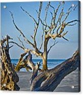 Boneyard Beach 3 Acrylic Print