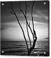 Bonita Beach Tree Black And White Acrylic Print