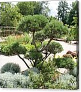 Bonsai In The Park Acrylic Print