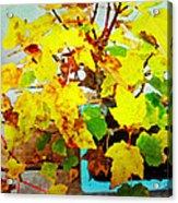Bonsai Tree With Yellow Leaves Acrylic Print