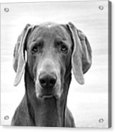 Published Book Cover Of Quotable Dogs  Acrylic Print