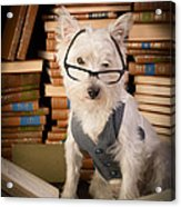 Bookworm Dog Acrylic Print