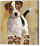 Boots For Baxter Acrylic Print