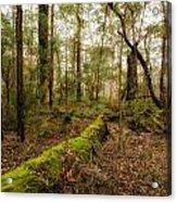 Boranup Forest - Western Australia Acrylic Print