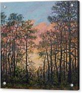 Border Pines Acrylic Print