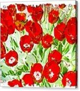 Bordered Red Tulips Acrylic Print
