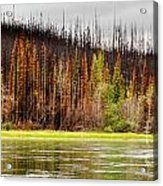 Boreal Forest At Yukon River Destroyed By Fire Acrylic Print
