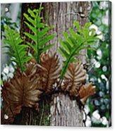 Borneo Fern A Primitve Ant Plant Acrylic Print