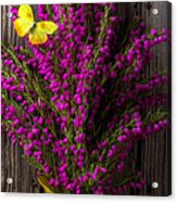 Boronia With Yellow Butterfly Acrylic Print
