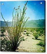 Borrego Desert Acrylic Print