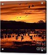 Bosque Del Apache Sunrise 1 Acrylic Print