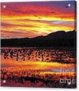 Bosque Sunset II Acrylic Print