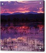 Bosque Sunset - Purple Acrylic Print