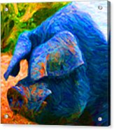 Boss Hog - 2013-0108 Acrylic Print by Wingsdomain Art and Photography
