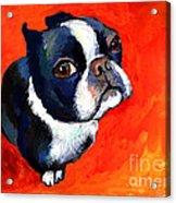 Boston Terrier Dog Painting Prints Acrylic Print