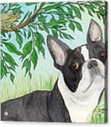 Boston Terrier Dog Tree Frog Cathy Peek Art Acrylic Print