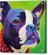 Boston Terrier - Ridley Acrylic Print by Alicia VanNoy Call