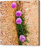 Botanica Series - Flowers In The Crack Acrylic Print