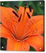 Botanical Beauty 1 Acrylic Print