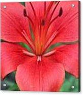 Botanical Beauty 2 Acrylic Print
