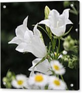 Botanical Beauty In White Acrylic Print