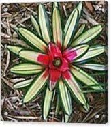 Botanical Flower Acrylic Print