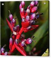 botanical garden in Costa Rica 2 Acrylic Print