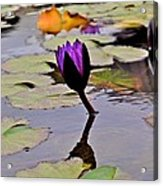 Botanical Garden Lotus Flowers Acrylic Print