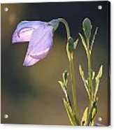Botanical Purple Iris Acrylic Print