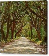 Botany Bay Road On Edisto Island Acrylic Print