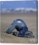 Bottle Of Blue Acrylic Print