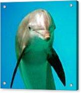 Bottlenose Dolphin Portrait Acrylic Print