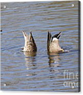 Bottoms Up Acrylic Print