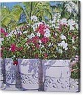 Bougainvillea Acrylic Print