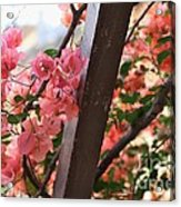 Bougainvillea On Trellis Acrylic Print