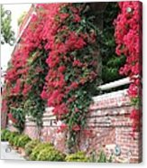 Bougainvillea Wall In San Francisco Acrylic Print